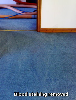 Carpet cleaned and blood stain removed in a property in Stowmarket